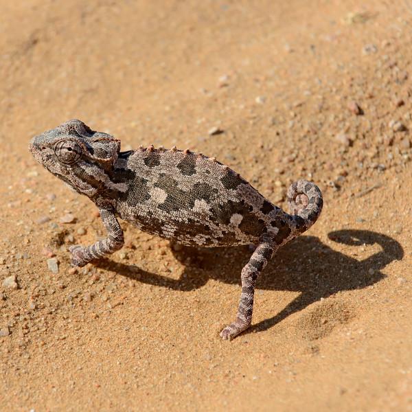2014 - Namibia