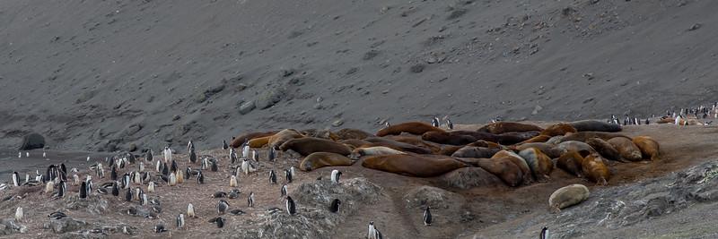 2019_01_Antarktis_01916.jpg