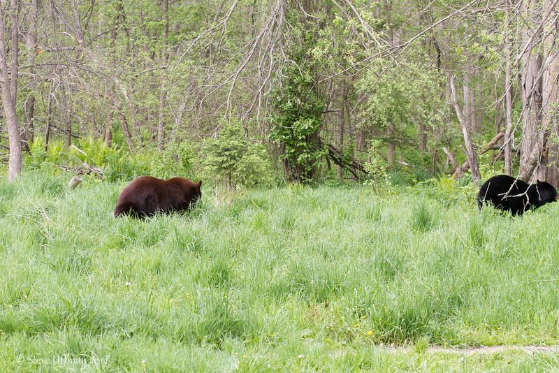 20120520-_MG_6541Black_Bears.jpg