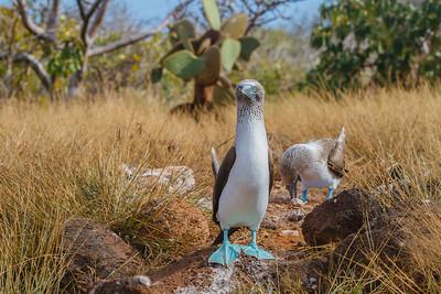 Galapagos National Park - Ecuador