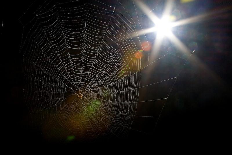 Spiderman-104.jpg