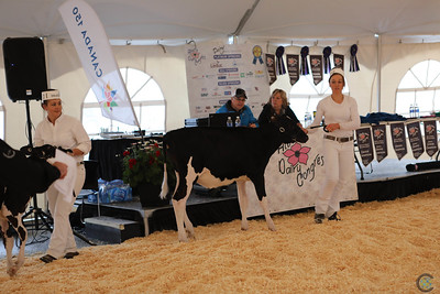 AB Dairy Congress Candids & Sale 2017