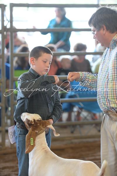 Market Goat Ringshots - 2
