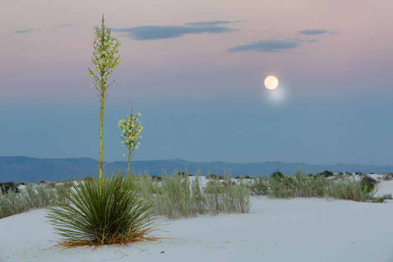 Yuccas and Rising Moon, White Sands, New Mecico