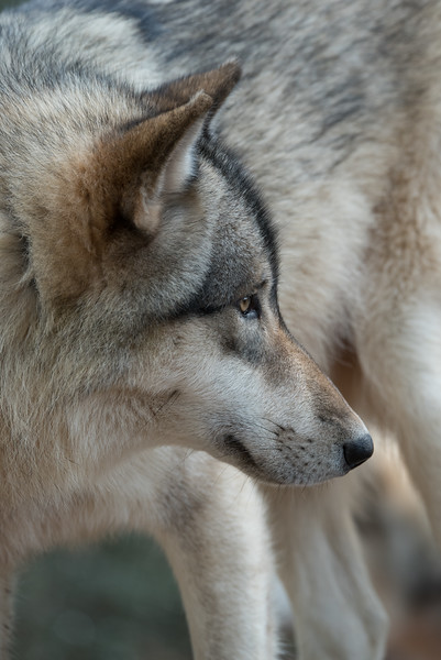 Seacrest Wolves_-57.jpg