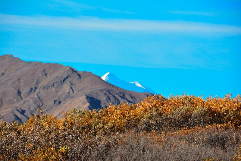 Denali-National-Park-80.jpg