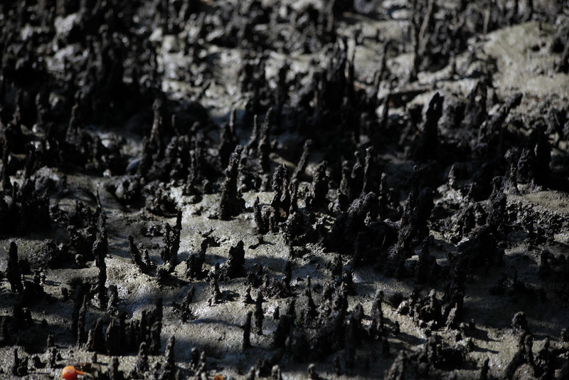 Doesn't this look like something done with a tilt-shift lens?
