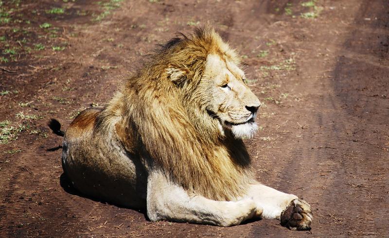 Ngorongoro (119).JPG