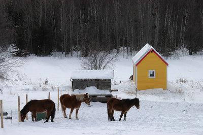 Marko's Horses