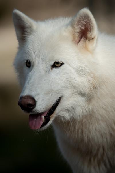Seacrest Wolves_-39.jpg