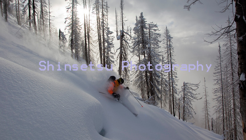 Tree skiing in BC.jpg