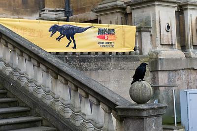Dinosaurs of China Press Launch 30-06-17