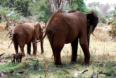 Samburu Kenya 2010 Part 2