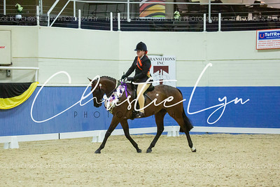 Class 19: Child's Large Show Hack over 16 hh
