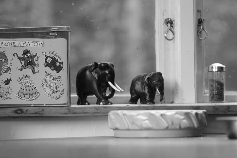Elefanter i köket