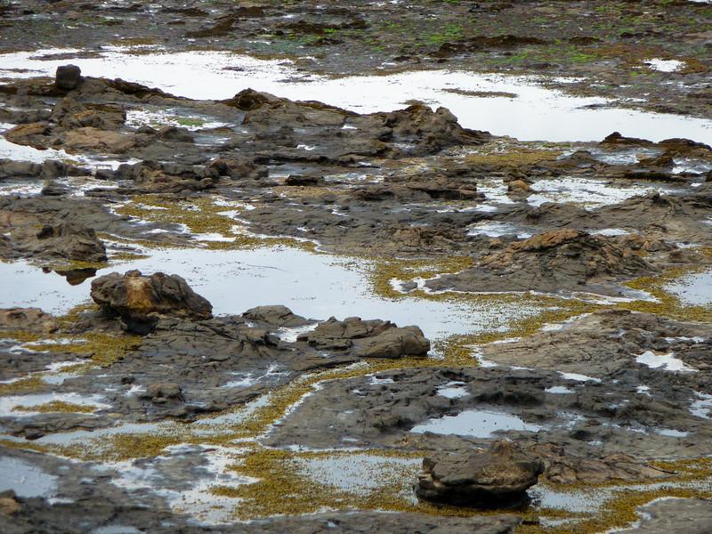 New Zealand - Curio Bay - Petrified forest