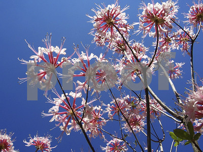 native-plants-are-important-for-their-beauty-pollinators