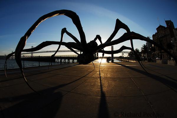 """""""Crouching Spider"""""""