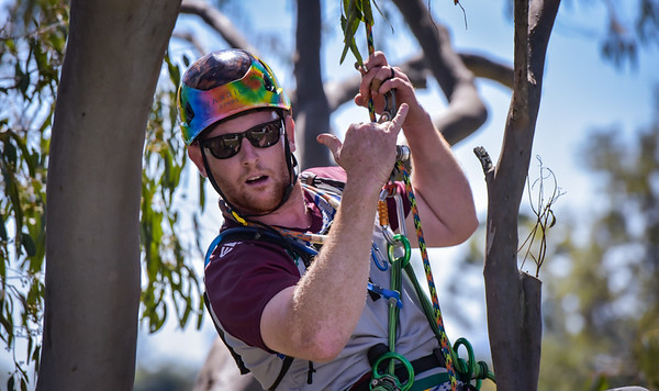 Queensland Tree Climbing Championships 2021