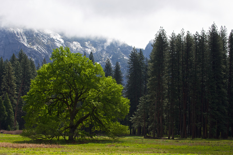 YOS-140422-0007 Trees in Meadow