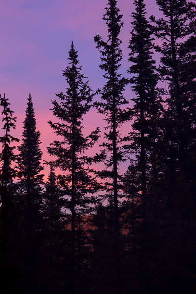 Pink Sunset Silhouette