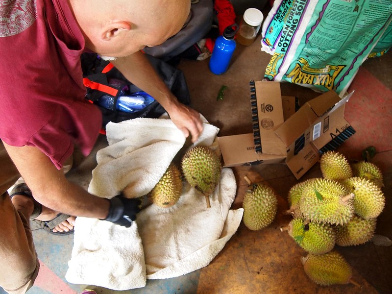 Packing-Maui-durian.jpg