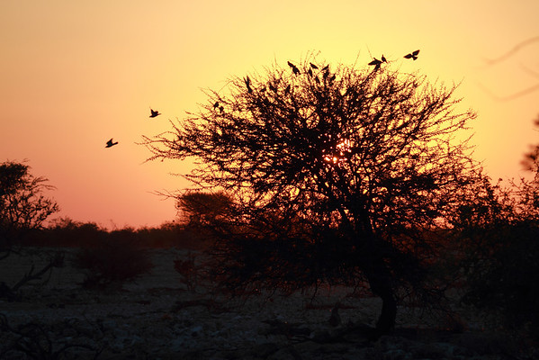 Etosha National Park - Namibia - 2013