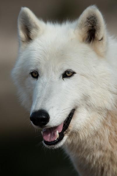 Seacrest Wolves_-45.jpg