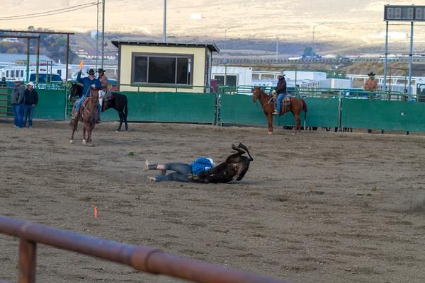 Steer Wrestling - Chute Dogging