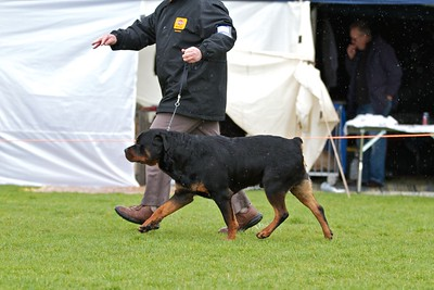 .Other Rottweilers