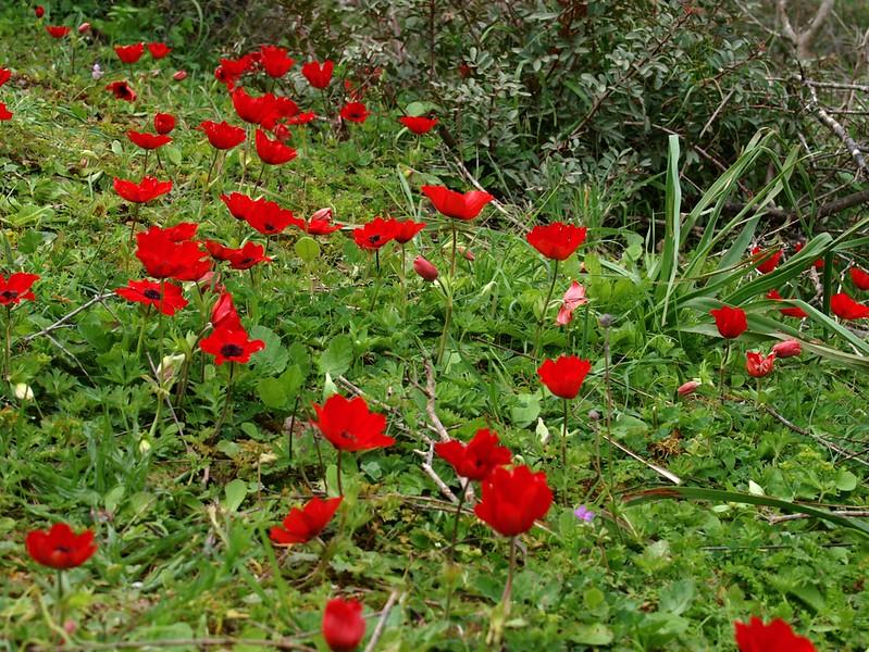 Kusadasi 26-03-09 (9).jpg