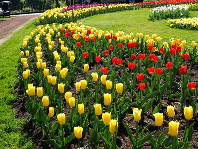 Tulip Garden_April 19, 2012