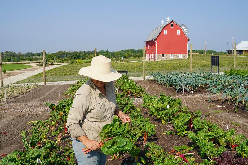 Arboretum Farm 8-19-34.JPG