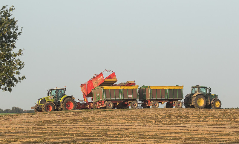 Claas Axion 810 with Grimme SE 150-60 harvesting potatoes in Ralshoven.