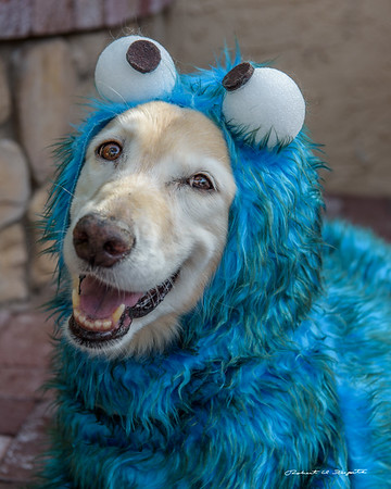 Chi Chi , Cookie Monster, and Lion
