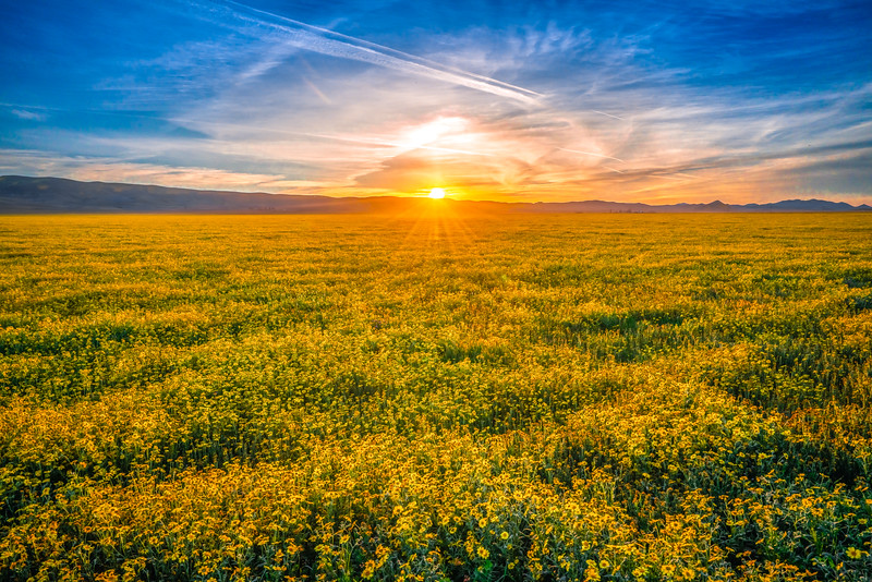 Carrizo Plain National Monument Wildflowers Superbloom Spring Symphony 11!  Elliot McGucken Fine Art Landscape Nature Photography Prints & Luxury Wall Art