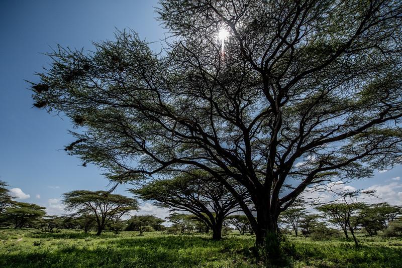 Samburu (43 of 70).jpg