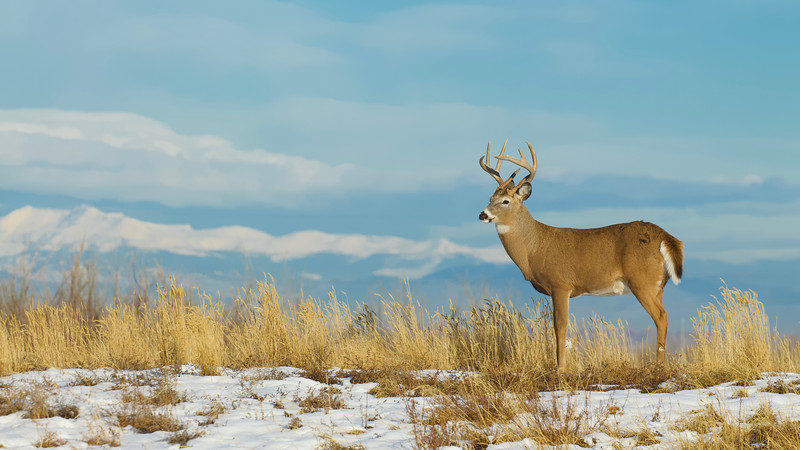 Whitetails in the Wild IMP - 1 (18).jpg