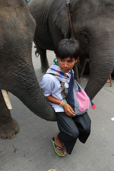 2014-11-14 Surin Elephant Welcome Feast 706.JPG