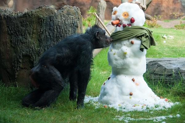 Chimps and Snowmen (2011)