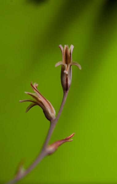 succulent flower 041020-2173.jpg