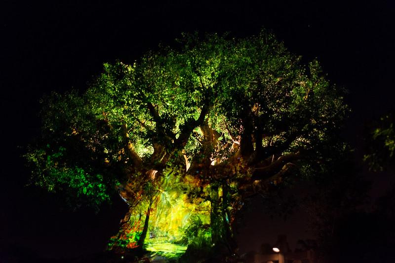 Tree of Life Awakening - Disney's Animal Kingdom, Walt Disney World