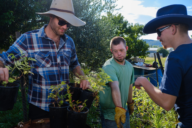 Gardeners working Together with Blueberry Seedlings