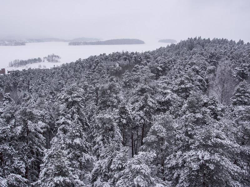 tampere forest 2.jpg