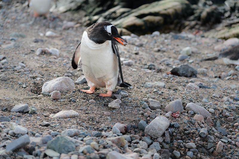 Antarctica-0919.jpg