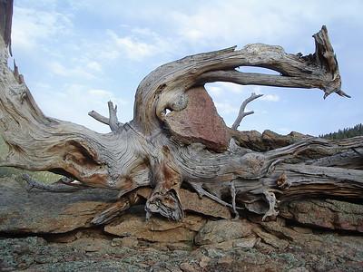 Moose Plop Rock Hike