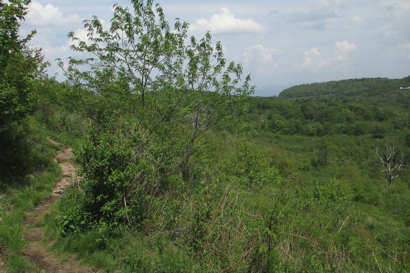Graveyard Ridge Trail (5,300')