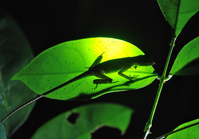 Guyana, South America 2011