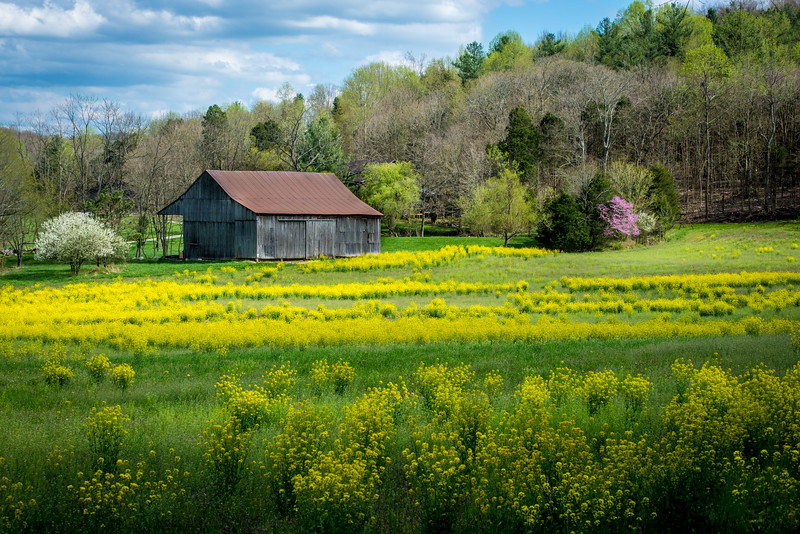 Obannon Woods Barn in Spring - White Cloud - Indiana