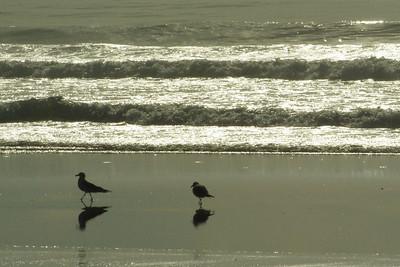 Ocean Beach 3/7/14